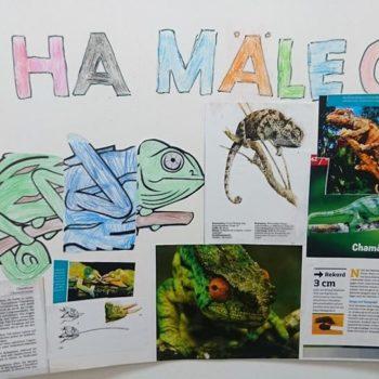 Chamäleons sind faszinierende Wesen.